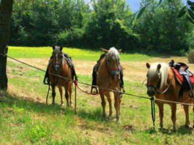 Cavalli a Badia di Moscheta_687_458_60